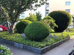 Buchsbaum - Gartenunterhalt Wetzikon - Zentralstrasse 3