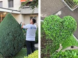 Baumpflege - Gartenunterhalt Wetzikon - Zentralstrasse 3