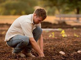 Bepflanzung im Garten